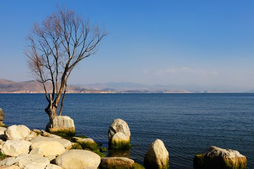 Tree and stones by the lake in Dali, Yunnan province of China