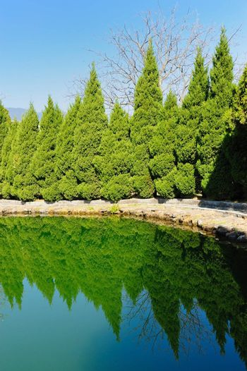 Pine trees with reflection in the lake