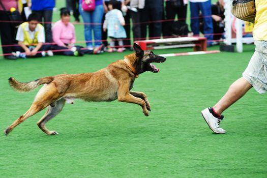Police dog chasing robber