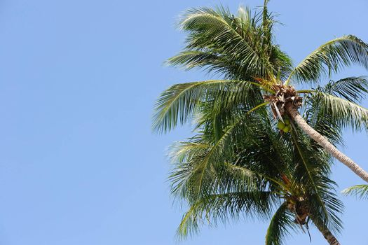 Two palm tree under the blue sky