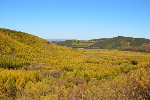 Grassland landscape with yellow leaves trees in the fall