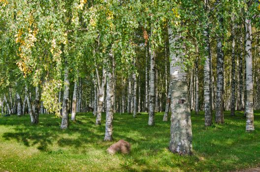 Birch Grove on the last day of summer