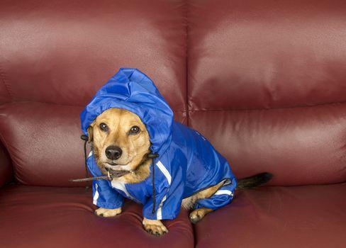 the blue rain dog