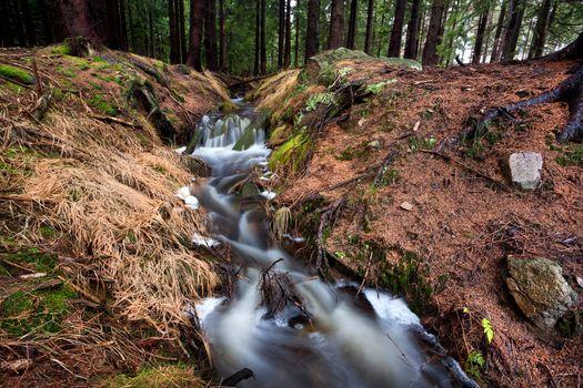 fast fresh creek in forest