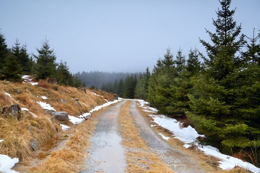 road in coniferous forest during winter