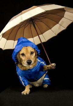 blue rain dog and umbrella