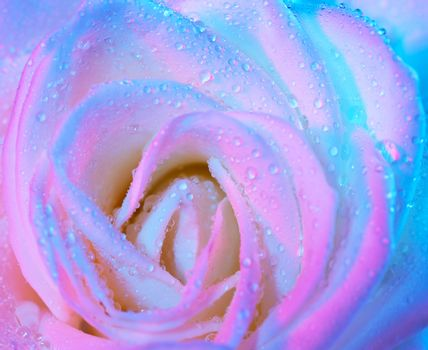 Abstract wet rose background