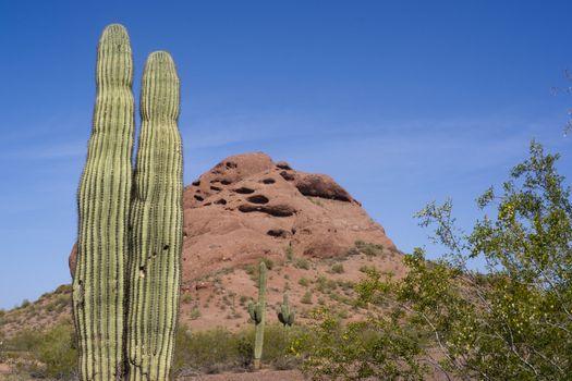 Arizona Desert Landscape Red Rocks with Cactus