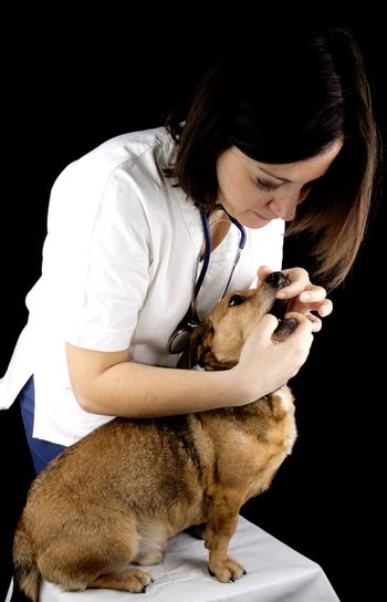 a veterinary girl and dachshund