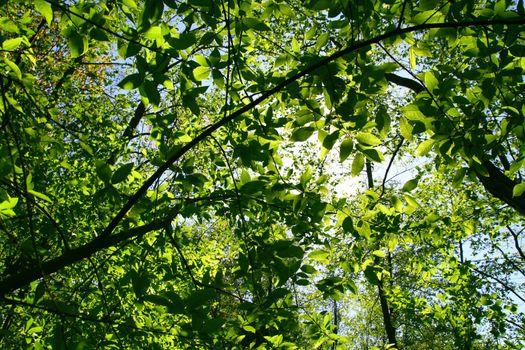 green fresh foliage