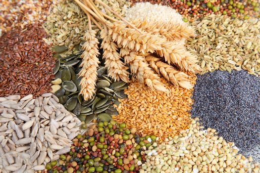 Assorted edible seeds with wheat
