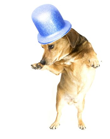 the musical dog