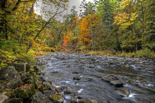 Forest river in the fall near Wakefield Mill