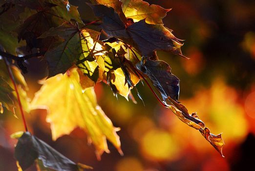 Leaf in the autumn landscape