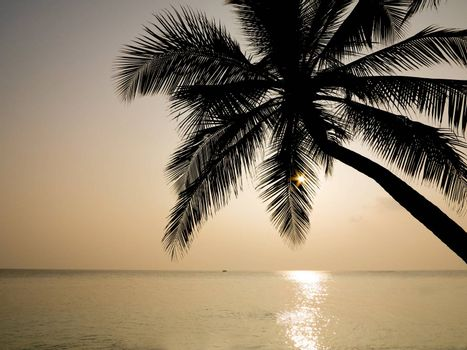 Maldives, tourist place. Palm trees silhouette at sunset.
