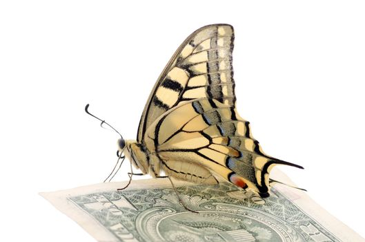 butterfly Papilio Machaon on one dollar banknote over white