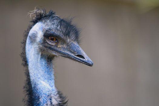a portrait of an ugly bird