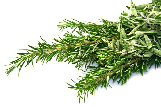 sage and rosemary isolated ion white background