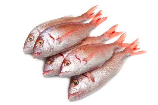 a group of sea bream on white
