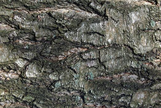 Closeup of old weathered cracked tree bark as background