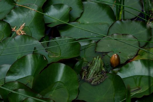 small green frog sitting on leaf in pond