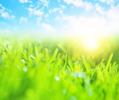Picture of beautiful green grass field and clear blue sky with bright sunlight, selective focus, wonderful landscape, spring season, rural place, nature outdoors, meadow in countryside