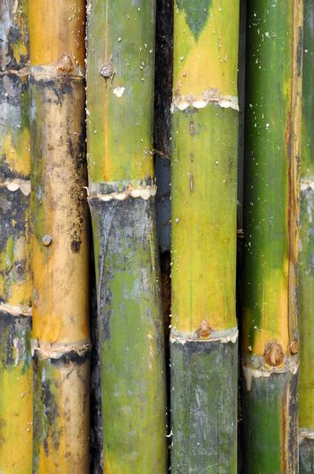 Bamboos are some of the fastest growing plants in the world.