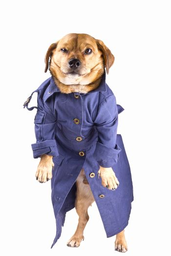 a dog and waterproof