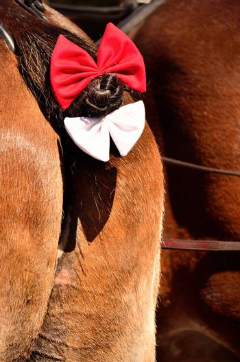 Well groomed horse's tail adorned with hair bows