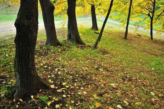 Autumn Colors in Park