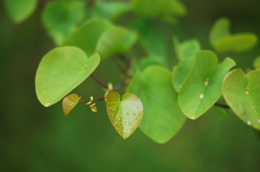 Botanic garden: spring first plant