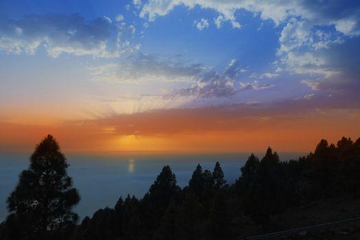 La Palma canary Pine backlight in sunset sky