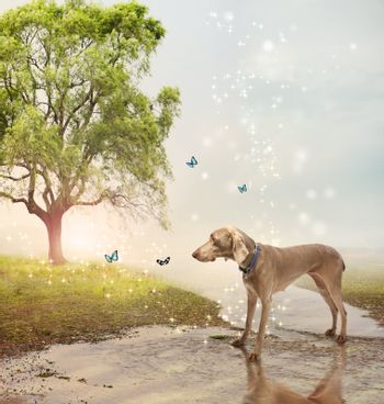 Dog and butterfies at a magical brook