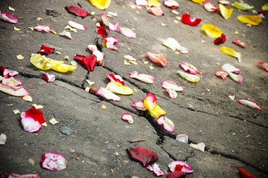 scattering petal
