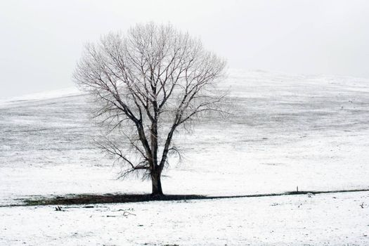 lonely tree on snow covered field