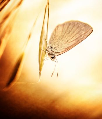 Grunge photo of butterfly