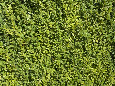 Summer or Spring Green Leaves Background