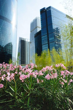 Flowers in the garden against modern urban building background