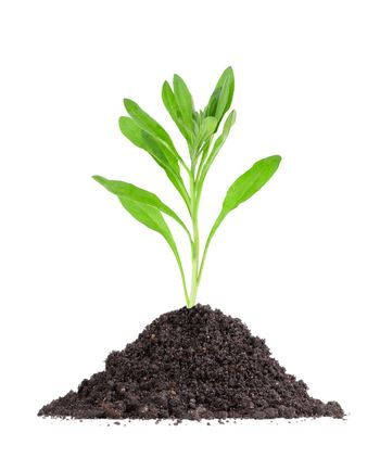 Plant in a mound of soil