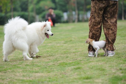 Two dogs playing together on the lawn