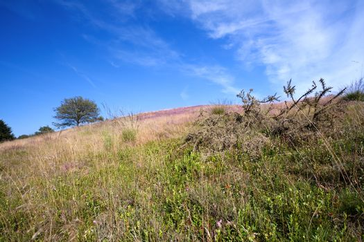 hill with pink heather