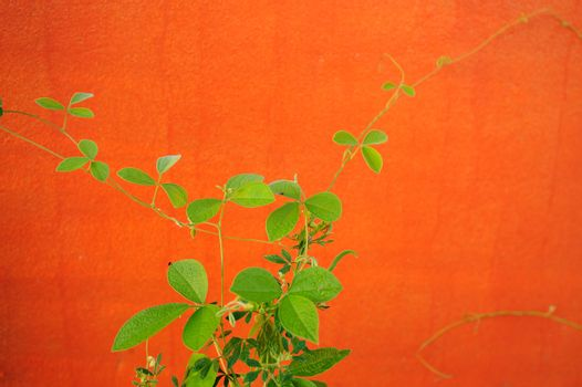 orange wall with flora