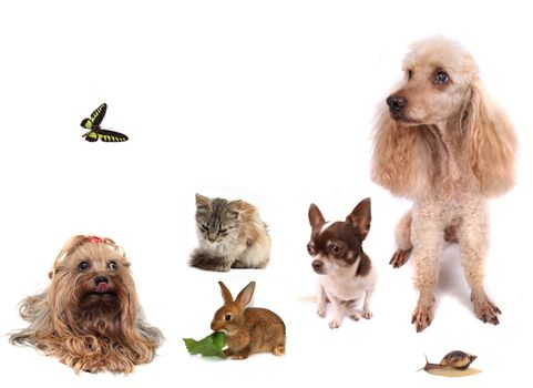dogs cat butterfly rabbit and snail on the white background
