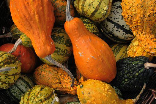 pumpkins background from the halloween garden