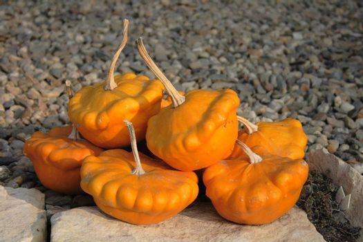 autumn pumpkins asn nice natural food background