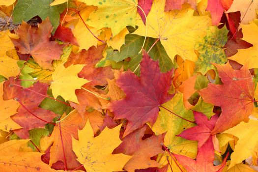 autumn leaves as very nice natural background