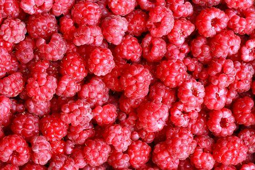 very nice fresh red raspberries background