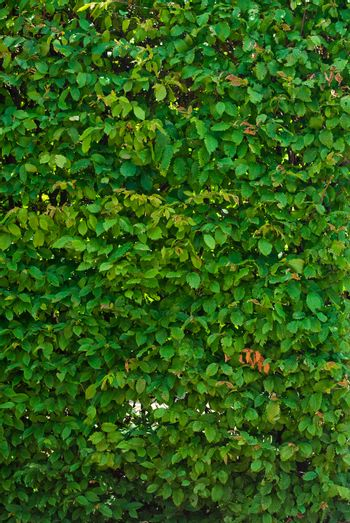 background of lush green leaves