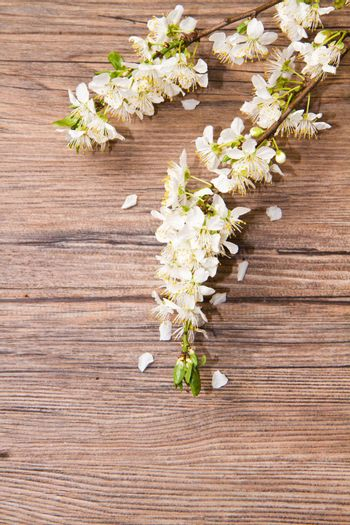 Wood background with spring flowers