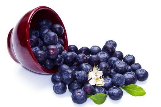 Blueberries in a bowl on white background